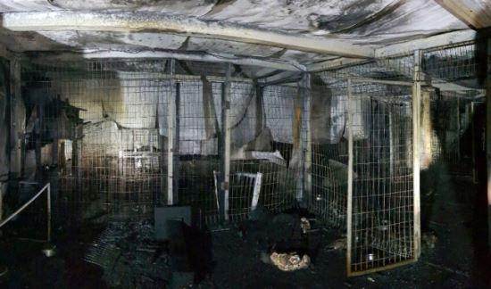 이효리 반려견 '순심이' 살던 보호소 화재… 개·고양이 260마리 소사   인스티즈