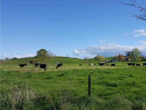 자연방목 뉴질랜드 퓨어락