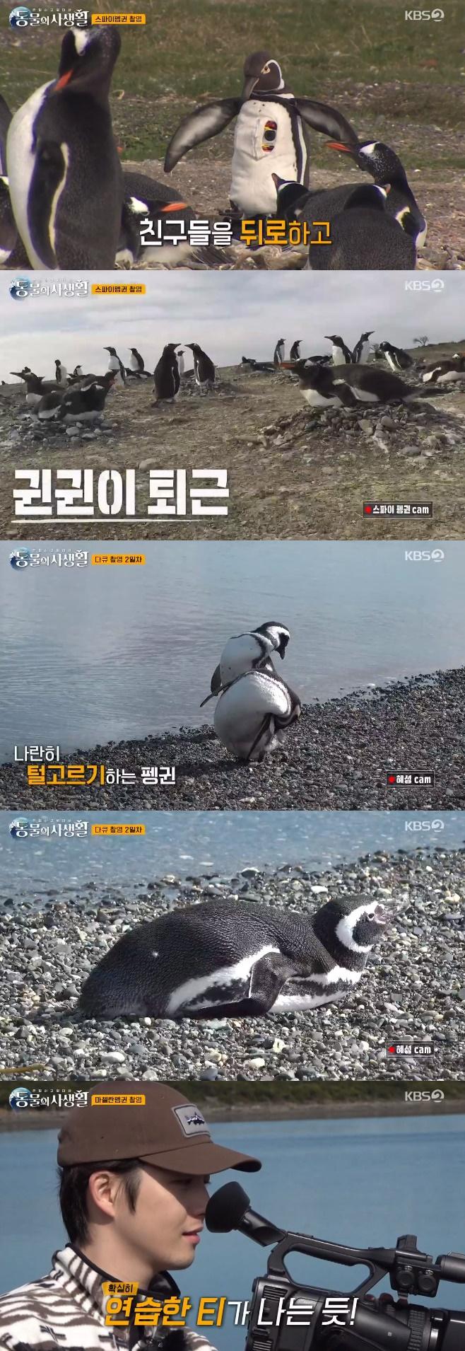 '동물의 사생활' 문근영, 진짜 펭귄 속인 근접 촬영 성공
