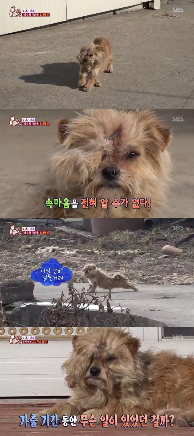 'TV동물농장' 가출했다 돌아온 초코, 완전 달라진 모습