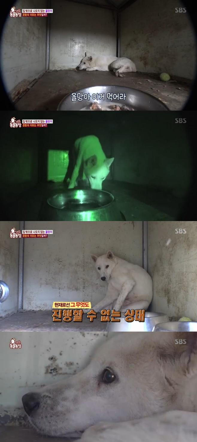 'TV동물농장' 50일째 히키코모리 올망이, 안타까운 사연