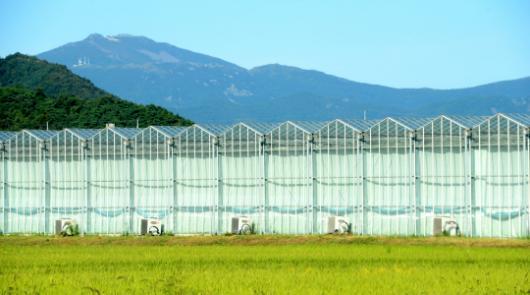 농업 4차혁명 스마트팜 전남 현황 및 과제