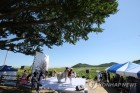 800년전 헤어진 남북 은행나무, 칠석에 다시 만나다(종합)