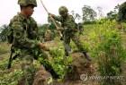 콜롬비아, 드론으로 코카인 원료 코카 잎 재배 근절 추진
