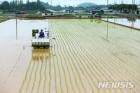 쌀 생산, 역대 5번째 낮은 387만t…쌀값 더 오르나