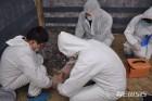 """중국 백두산 인근서 돼지열병 발생...""""한반도 전파 위험"""""""