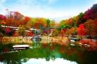 '화담숲 가을 야생화 소풍전' 外