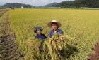 """올여름 폭염에 쌀 생산량 감소할 듯.. """"383만∼387만톤 예상"""""""