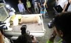 (9) '야생'과 '보호' 사이…퓨마의 죽음이 환기시킨 '동물원의 역설'
