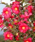 (3)제주의 봄이 만개하기 전, 먼저 활짝 피는 맛…빙·방·무