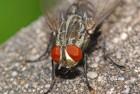 놀라운 초파리…3차원 비행과 생체 내비게이션의 비밀