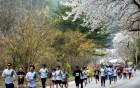 '환상의 봄길' 춘천호반마라톤대회 4월 21일 열린다