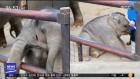 사육사에게 혼난 아기 코끼리 '나 삐쳤어'