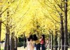 나들이 하기 좋은 '가을~가을~'..미세먼지 '좋음'