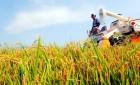 쌀값 급등에 논 경작 수익 34.8% 늘어