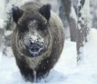 방향성 잃은 내년 증시, '멧돼지' 잡는 투자전략은?