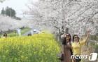 제주에서 봄 만끽하려면?…제주관광공사 관광 10선 발표