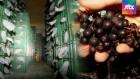 아로니아, 농가 골칫거리로…'슈퍼푸드의 몰락'