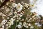 '봄 시사회' 사흘 투자 짧은 일정으로 떠난 일본 이바라키 '2박 럭키'