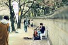 4월의 경주는 꽃 대궐, 벚꽃축제 즐겨요