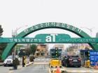 미세먼지 덮치자 '공기정화식물' 판매 불티…양재꽃시장 스타는 '아레카야자·스투키'