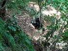 대구지방환경청, '반달가슴곰 대구·경북권역 공존협의체' 발족