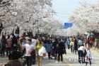 정읍시 정읍천 벚꽃로~천변로 연결다리 만든다