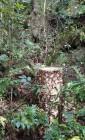 절대보전지역 나무 잘라낸 골프장에 원상복구 방침