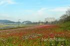 '장성 황룡강' 겨울의 문턱에도 꽃으로 물들다!