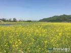 천안시, 풍서천 아름다운 하천 환경 조성완료!