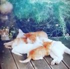갈소원 남다른 고양이 사랑이 만들어낸 냥스타그램…반려묘 사진 올려 애묘인 과시