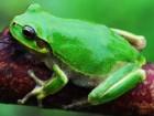 개구리를 사랑한 과학자, 김종범 박사