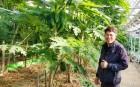 곡성 정재균 임마누엘 아트팜 대표, 열대과일 파파야 매주 1t 생산