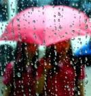 날씨예보 오늘 폭염 광복절 태풍 리치 남부 폭우…내일 말복은