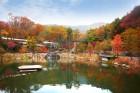 예쁜 가을꽃의 하모니...14일부터 화담숲 '가을야생화 소풍전'