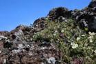 국립생태원 기후변화 취약식물종 연구 결과 도서 발간