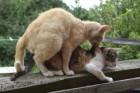 임신한 고양이 증상과 돌보는 법
