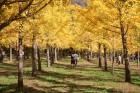 이번 주말 가을여행? 단풍+억새+갈대가 넘실대는 전국 '10월 여행지 추천' 8곳
