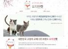20년 전통 명품고양이 전문 교배샵 요치엔캣, A급 신랑묘 전품종 보유 중으로 실물 확인이 가능한 곳
