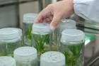 물 속에서 자라는 '수경재배식물', 수경재배 요령과 다양한 수경재배식물 종류는?