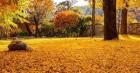 가을이 사뿐 내려앉은 길…앙증맞은 산사, 반가이 객을 맞다