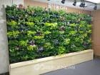 강남구, 무더위 쉼터에 식물 공기정화 시스템 구축