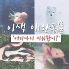 쉽게 접하지 못한 희귀 애완동물 키우기 위한 필수 아이템 대공개