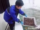 바다 팔방미인 '어린해삼 60만 미' 방류