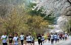 '호수와 꽃, 환상의 봄길 레이스' 제16회 춘천호반마라톤대회