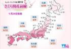 일본 국민의 사랑 벚꽃