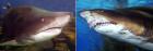 달팽이 이빨 vs 상어이빨 개수, 정답은?…'상상초월로 많아'