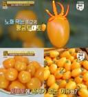 '천기누설' 황금토마토, 노화 막는 시스리코펜…'효능은?'