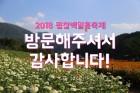 '2018 평창 백일홍축제' 성료…경제효과 45억여 원