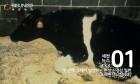 우리나라가 청정국으로 인정받은 '가축질병' 3가지